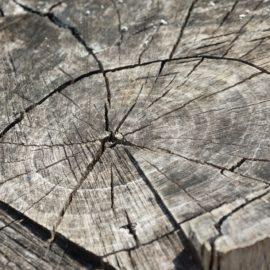 KBT-Gegenstand: Naturgegenstände aus dem Wald